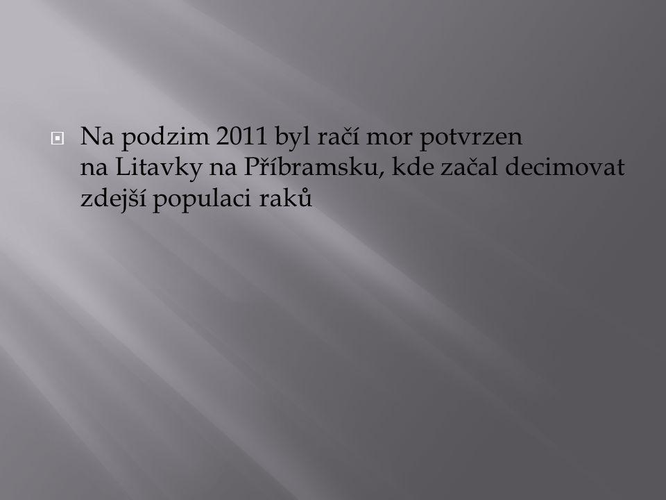  Na podzim 2011 byl račí mor potvrzen na Litavky na Příbramsku, kde začal decimovat zdejší populaci raků