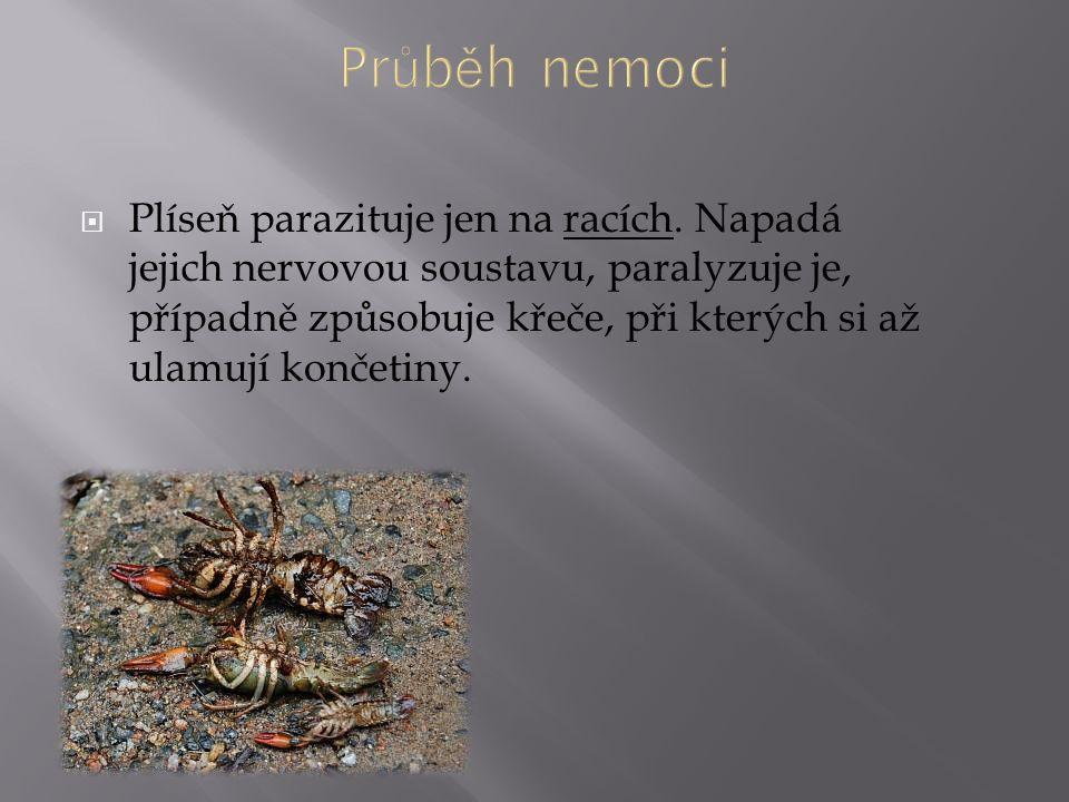  Plíseň parazituje jen na racích. Napadá jejich nervovou soustavu, paralyzuje je, případně způsobuje křeče, při kterých si až ulamují končetiny.