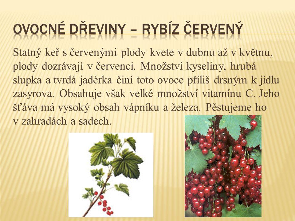 Statný keř s červenými plody kvete v dubnu až v květnu, plody dozrávají v červenci. Množství kyseliny, hrubá slupka a tvrdá jadérka činí toto ovoce př