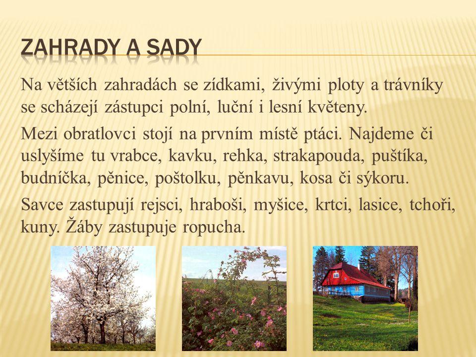 Pěstujeme ji v sadech v nížinách.Vyskytuje se jako strom i keř.