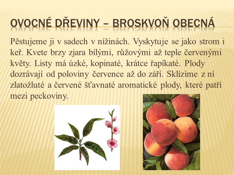 Pěstujeme ji v sadech v nížinách. Vyskytuje se jako strom i keř. Kvete brzy zjara bílými, růžovými až teple červenými květy. Listy má úzké, kopinaté,