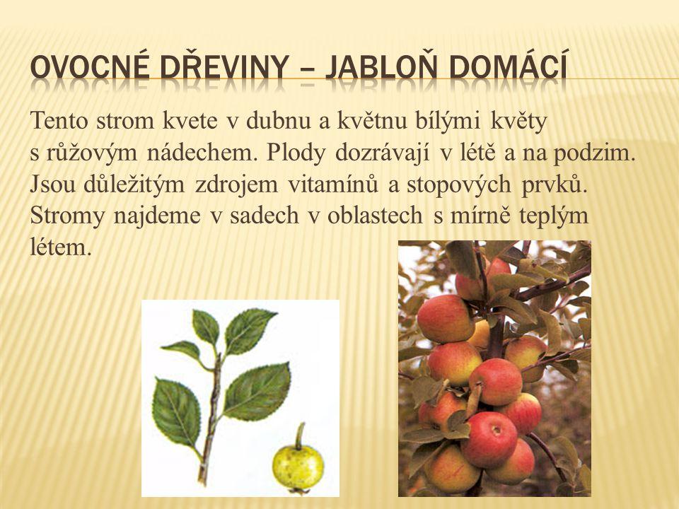Tento strom kvete v dubnu a květnu bílými květy s růžovým nádechem. Plody dozrávají v létě a na podzim. Jsou důležitým zdrojem vitamínů a stopových pr
