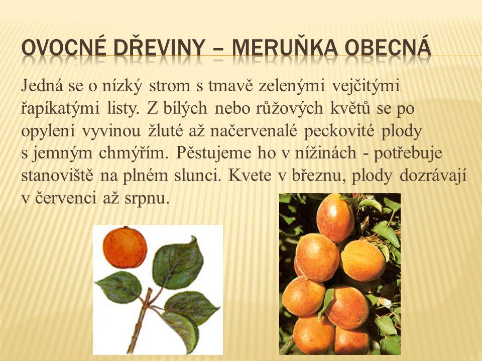 Vytrvalá bylina s větveným oddenkem a vzpřímenou chlupatou lodyhou často silně větvenou.