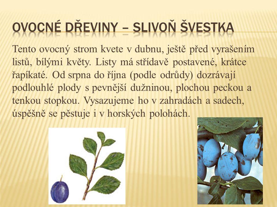 Tento ovocný strom pěstujeme v zahradách a sadech.