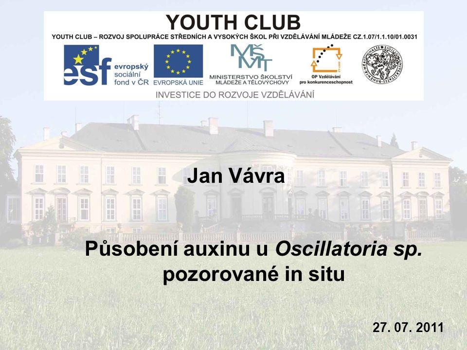 Jan Vávra 27. 07. 2011 Působení auxinu u Oscillatoria sp. pozorované in situ