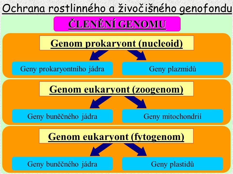 Ochrana rostlinného a živočišného genofondu Geny prokaryontního jádra Geny plazmidů Geny buněčného jádra Geny mitochondrií Geny buněčného jádra Geny p