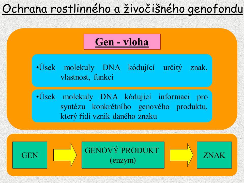 Ochrana rostlinného a živočišného genofondu Gen - vloha GEN GENOVÝ PRODUKT (enzym) ZNAK Úsek molekuly DNA kódující určitý znak, vlastnost, funkci Úsek
