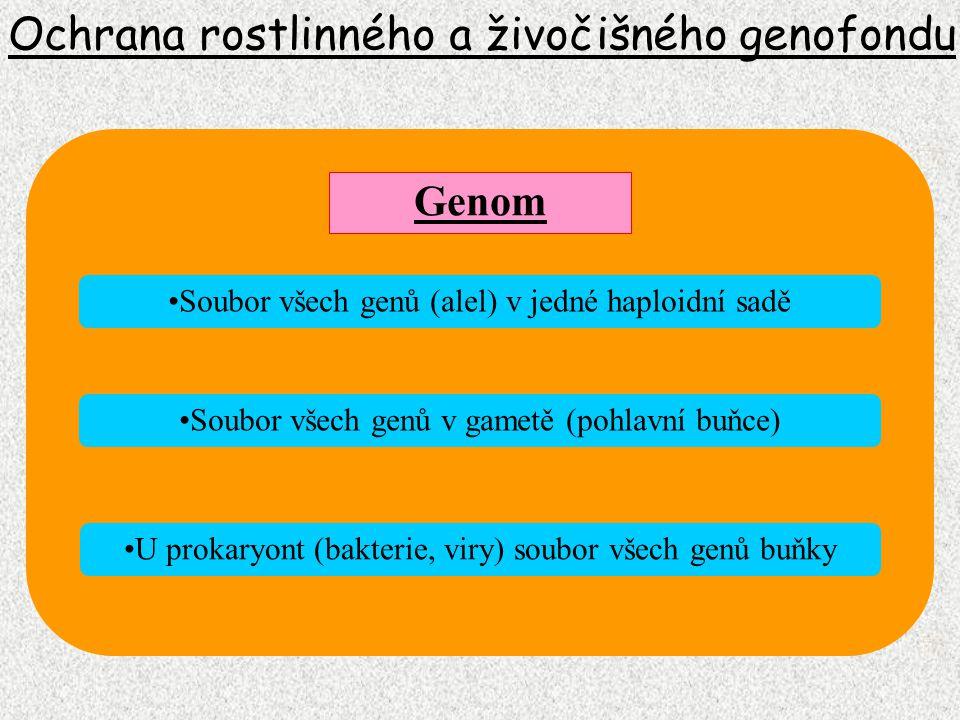 Ochrana rostlinného a živočišného genofondu Genom Soubor všech genů (alel) v jedné haploidní sadě Soubor všech genů v gametě (pohlavní buňce) U prokar