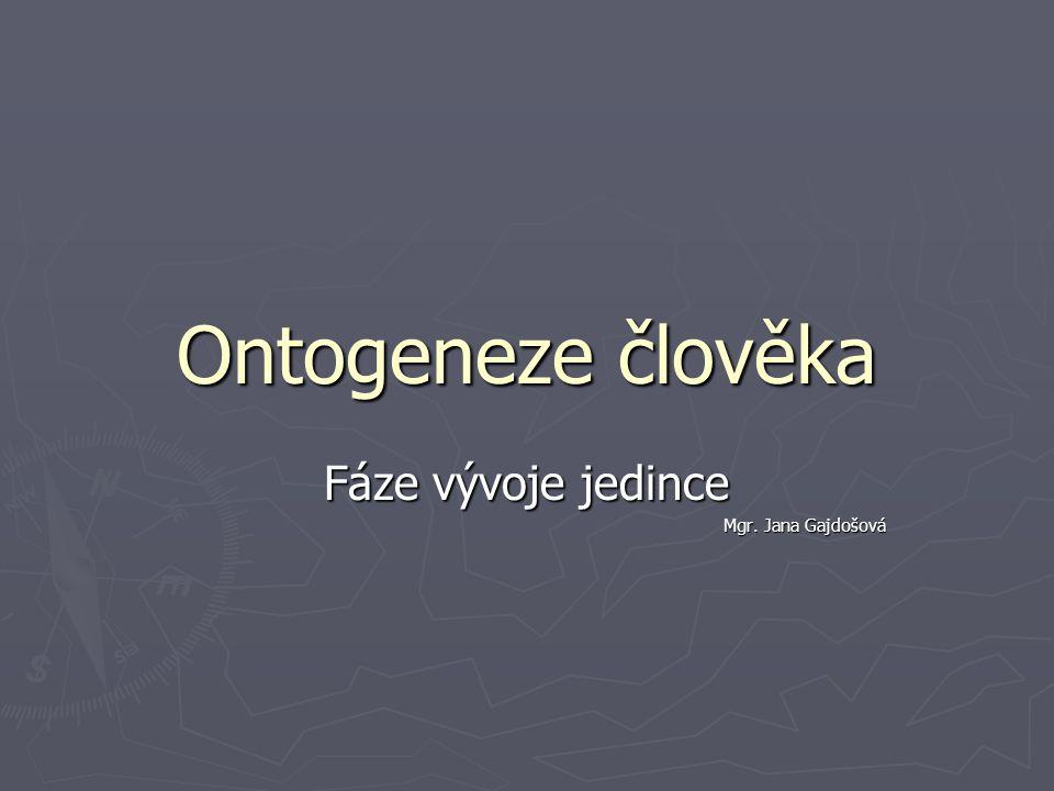 Ontogeneze člověka Fáze vývoje jedince Mgr. Jana Gajdošová