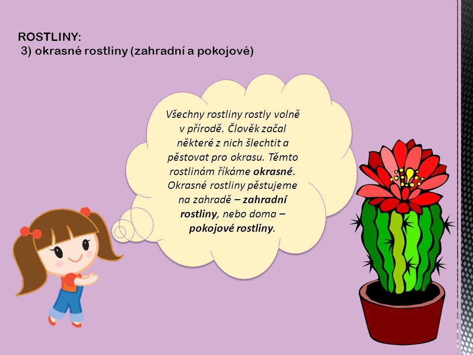 ROSTLINY: 3) okrasné rostliny (zahradní a pokojové) Všechny rostliny rostly volně v přírodě.