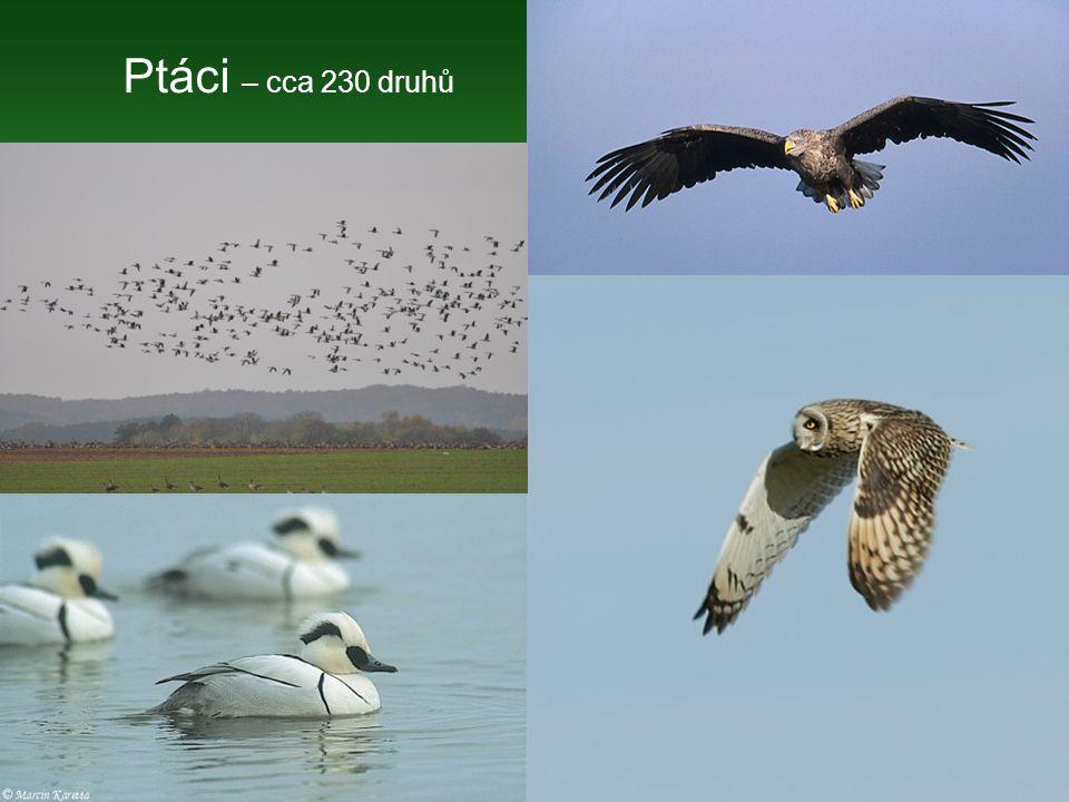 Ptáci – cca 230 druhů
