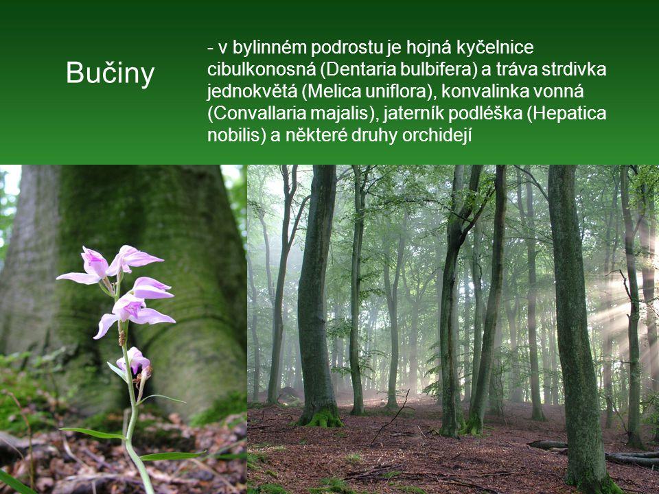 Smíšené lužní lesy (jasany-olše-jilm)