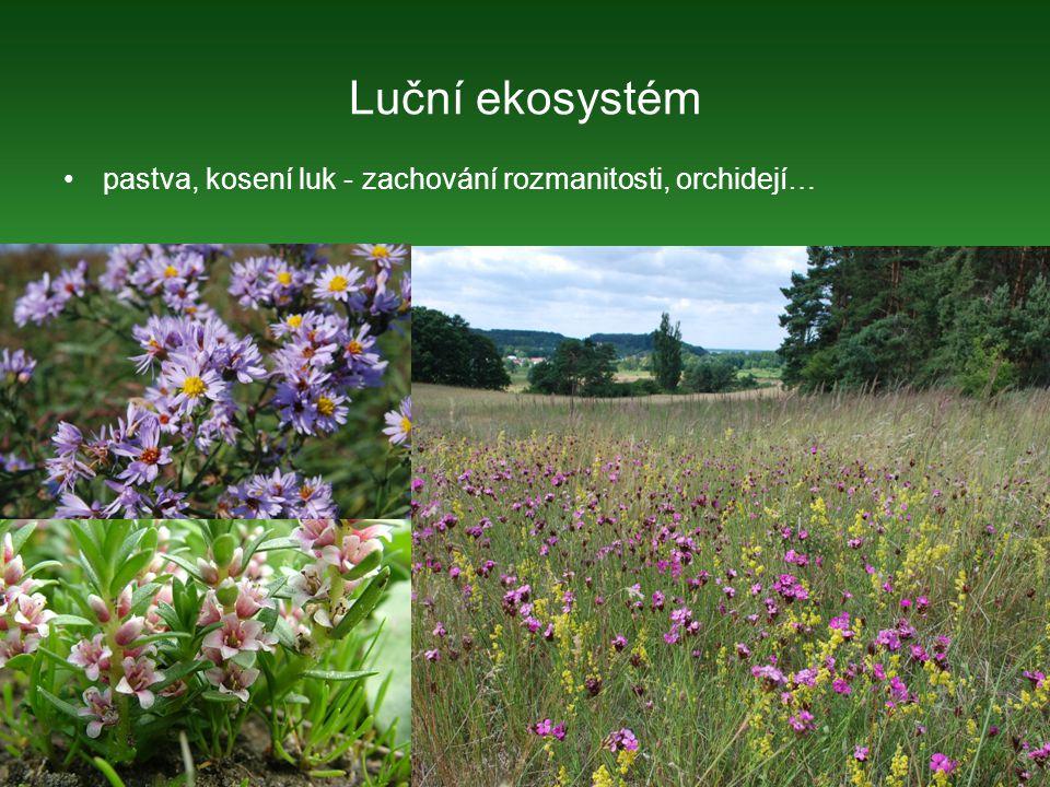 pastva, kosení luk - zachování rozmanitosti, orchidejí…