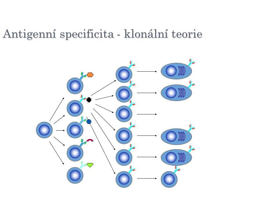 Antigenní specificita - klonální teorie