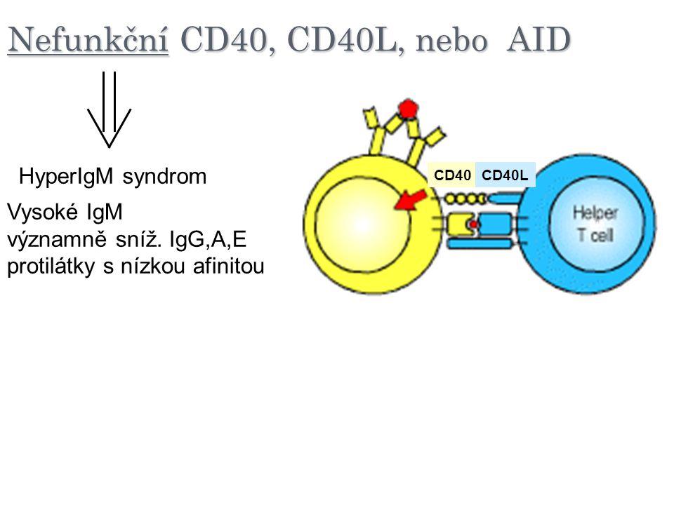 Nefunkční CD40, CD40L, nebo AID CD40CD40L HyperIgM syndrom Vysoké IgM významně sníž. IgG,A,E protilátky s nízkou afinitou