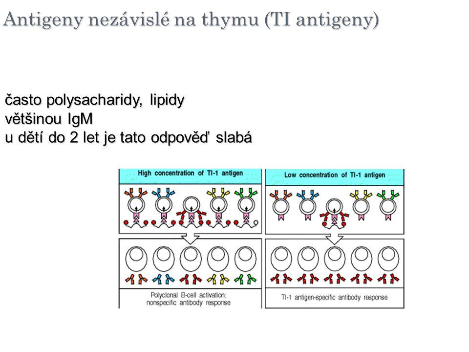Antigeny nezávislé na thymu (TI antigeny) často polysacharidy, lipidy většinou IgM u dětí do 2 let je tato odpověď slabá