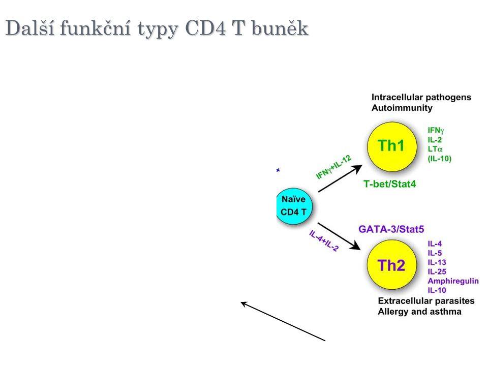 (n)Treg Další funkční typy CD4 T buněk
