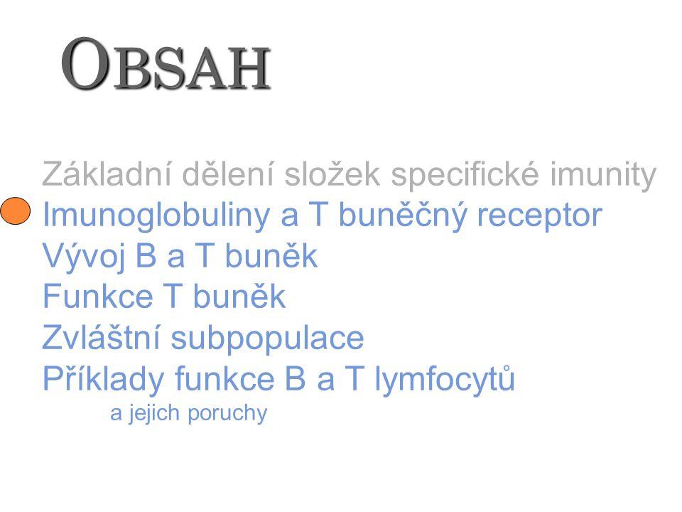 O BSAH Základní dělení složek specifické imunity Imunoglobuliny a T buněčný receptor Vývoj B a T buněk Funkce T buněk Zvláštní subpopulace Příklady fu
