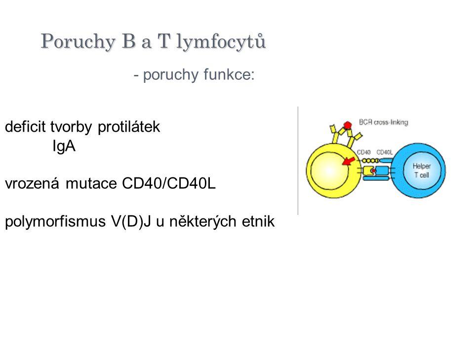 deficit tvorby protilátek IgA vrozená mutace CD40/CD40L polymorfismus V(D)J u některých etnik - poruchy funkce: Poruchy B a T lymfocytů