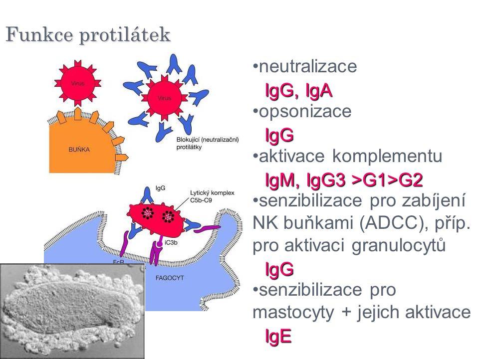 Funkce protilátek neutralizace opsonizace aktivace komplementu senzibilizace pro zabíjení NK buňkami (ADCC), příp. pro aktivaci granulocytů senzibiliz