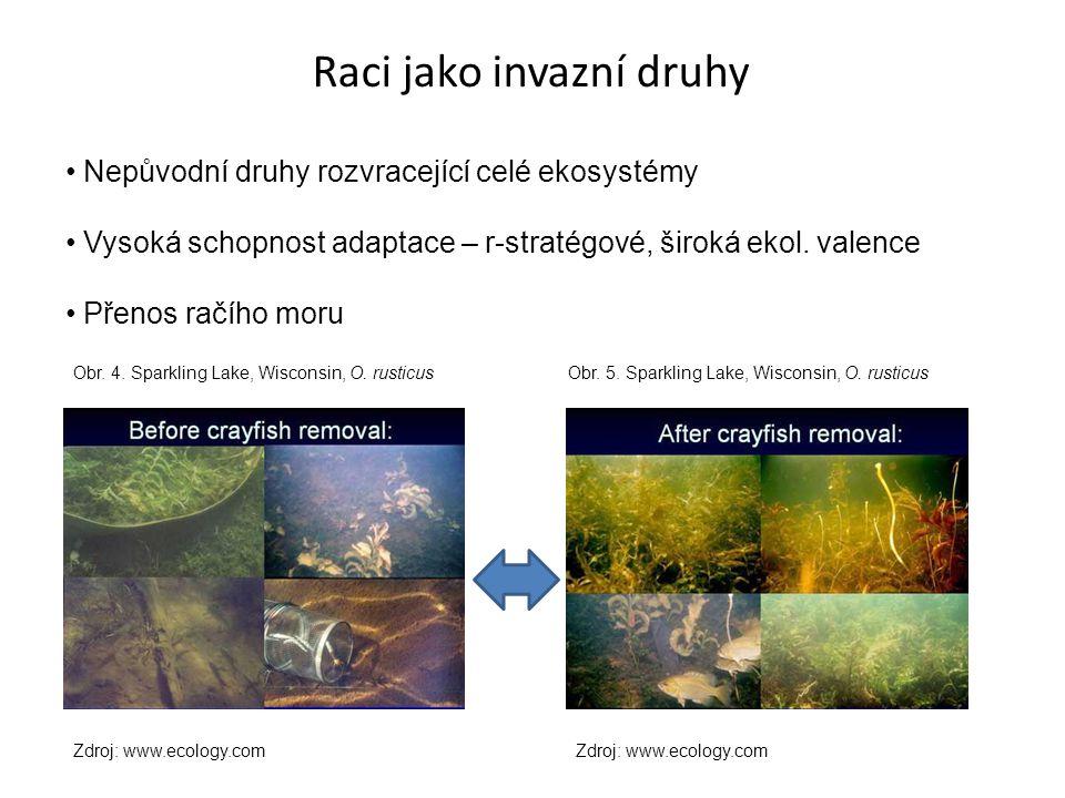 Raci jako invazní druhy Nepůvodní druhy rozvracející celé ekosystémy Vysoká schopnost adaptace – r-stratégové, široká ekol.