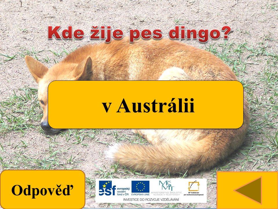 Odpověď v Austrálii