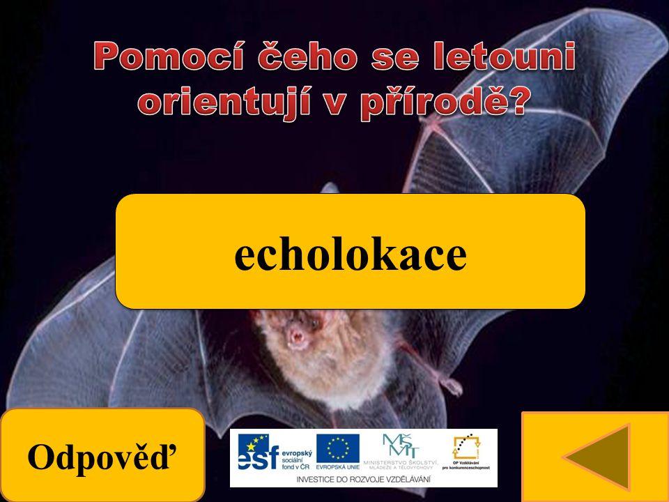 Odpověď echolokace
