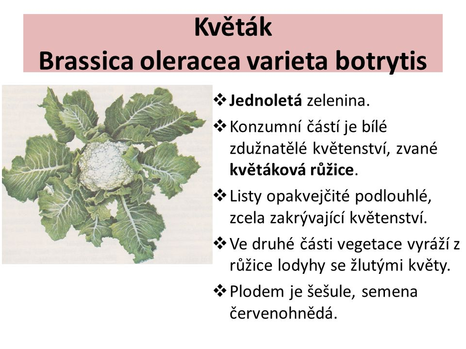 Květák Brassica oleracea varieta botrytis  Jednoletá zelenina.  Konzumní částí je bílé zdužnatělé květenství, zvané květáková růžice.  Listy opakve