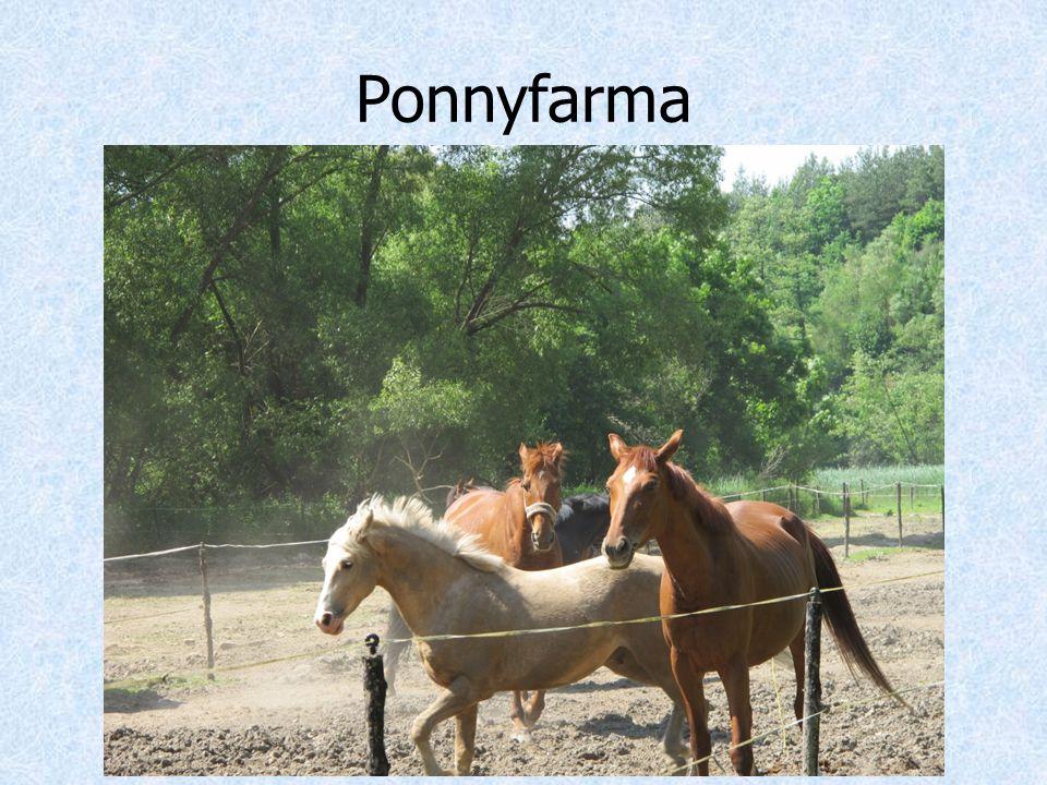 Ponnyfarma