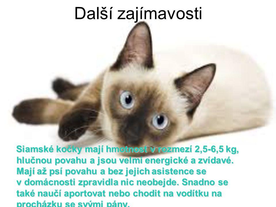 Další zajímavosti Siamské kočky mají hmotnost v rozmezí 2,5-6,5 kg, hlučnou povahu a jsou velmi energické a zvídavé. Mají až psí povahu a bez jejich a