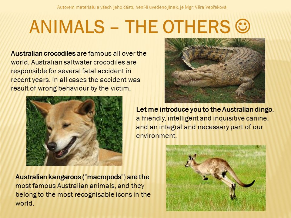 ANIMALS – THE OTHERS Australian crocodiles are famous all over the world.