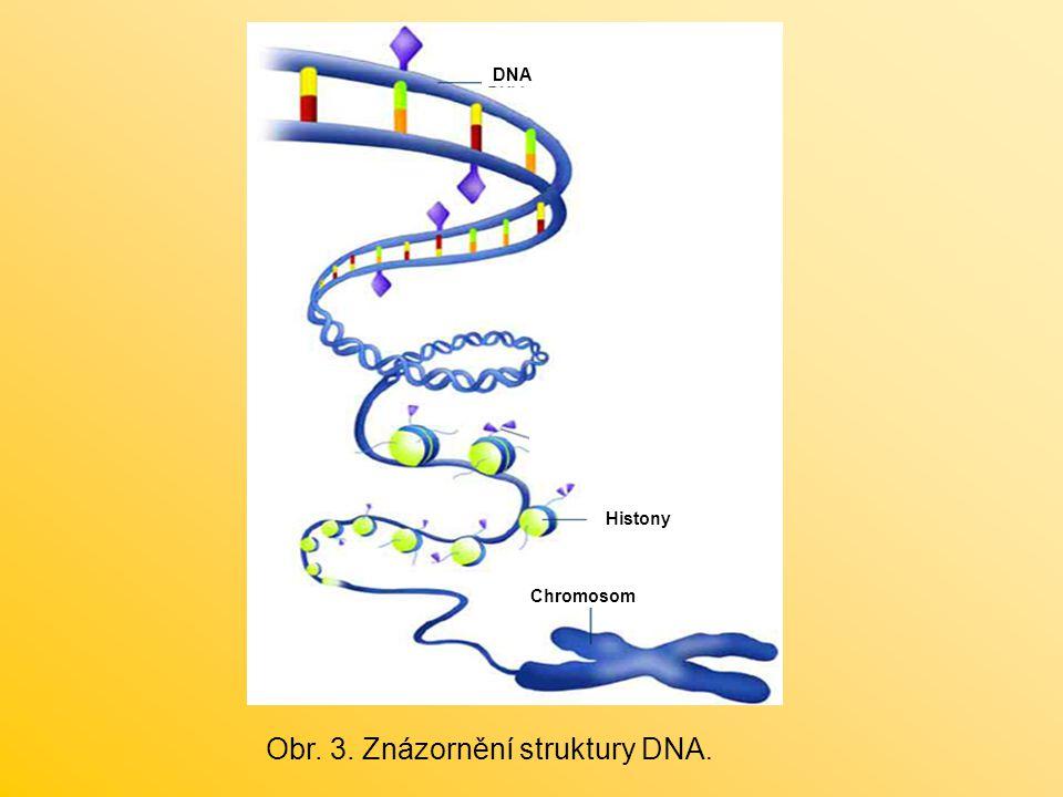 Histony Chromosom DNA Obr. 3. Znázornění struktury DNA.