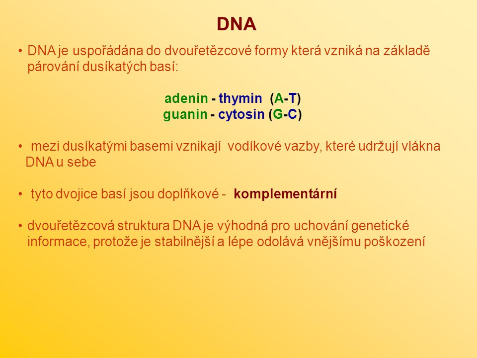 DNA DNA je uspořádána do dvouřetězcové formy která vzniká na základě párování dusíkatých basí: adenin - thymin (A-T) guanin - cytosin (G-C) mezi dusík