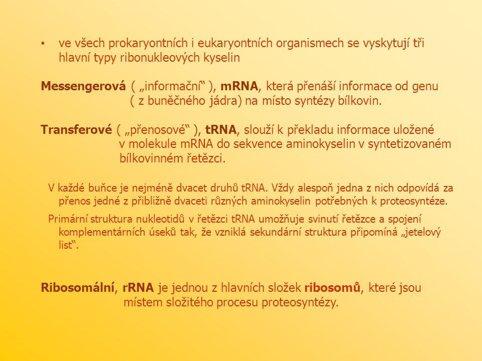 """ve všech prokaryontních i eukaryontních organismech se vyskytují tři hlavní typy ribonukleových kyselin Messengerová ( """"informační"""" ), mRNA, která pře"""