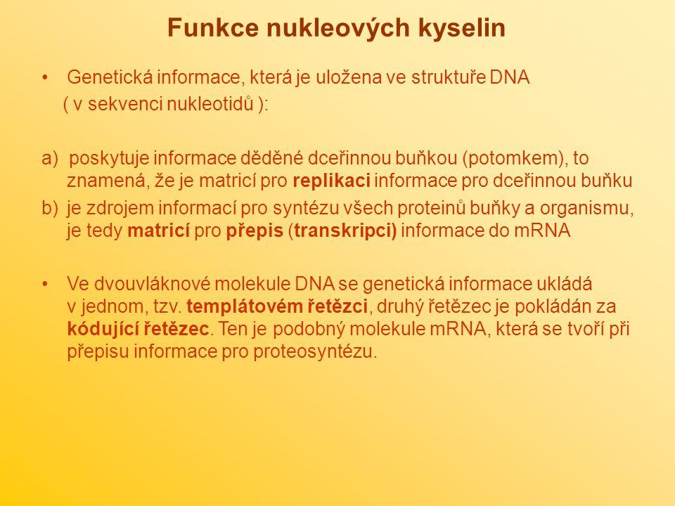 Funkce nukleových kyselin Genetická informace, která je uložena ve struktuře DNA ( v sekvenci nukleotidů ): a) poskytuje informace děděné dceřinnou bu