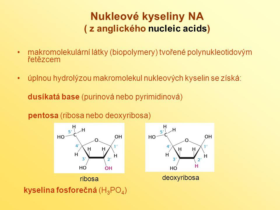 makromolekulární látky (biopolymery) tvořené polynukleotidovým řetězcem úplnou hydrolýzou makromolekul nukleových kyselin se získá: dusíkatá base (pur