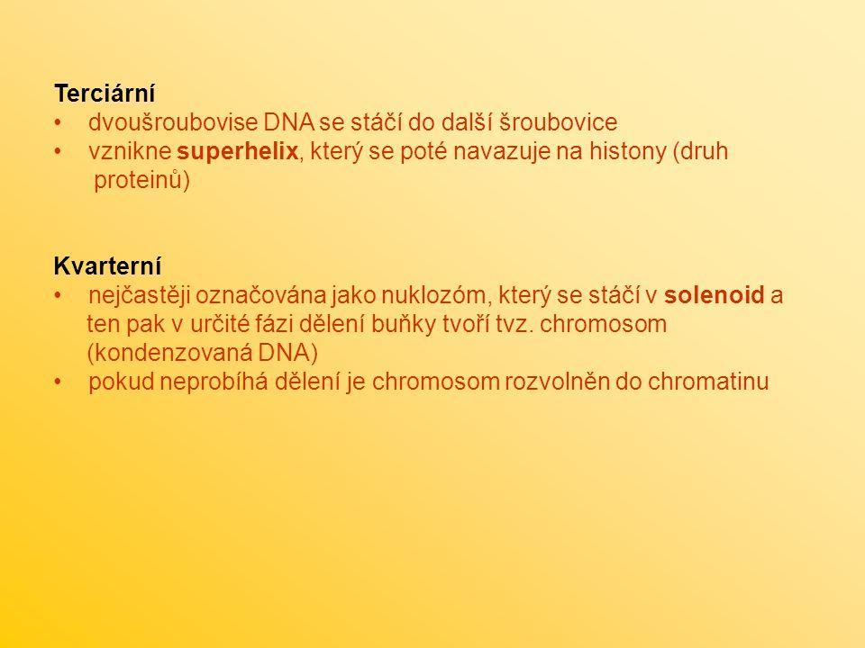 Terciární dvoušroubovise DNA se stáčí do další šroubovice vznikne superhelix, který se poté navazuje na histony (druh proteinů) Kvarterní nejčastěji o