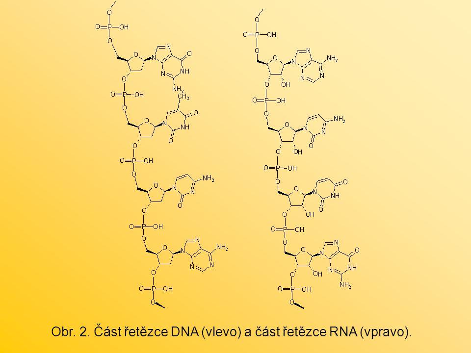 Obr. 2. Část řetězce DNA (vlevo) a část řetězce RNA (vpravo).