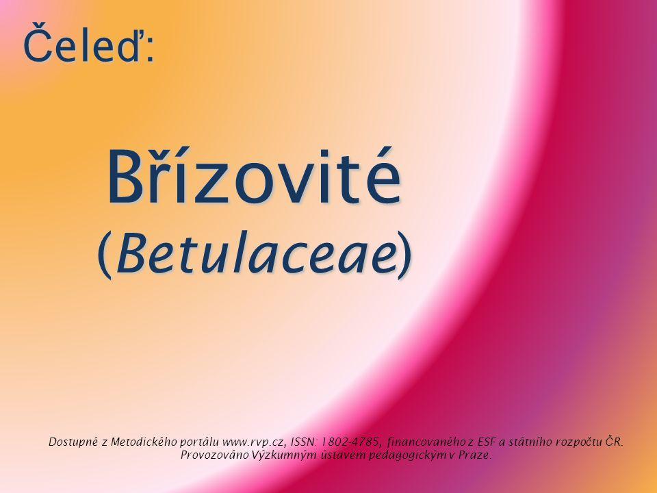 B ř ízovité (Betulaceae) Č ele ď : Dostupné z Metodického portálu www.rvp.cz, ISSN: 1802-4785, financovaného z ESF a státního rozpo č tu Č R. Provozov