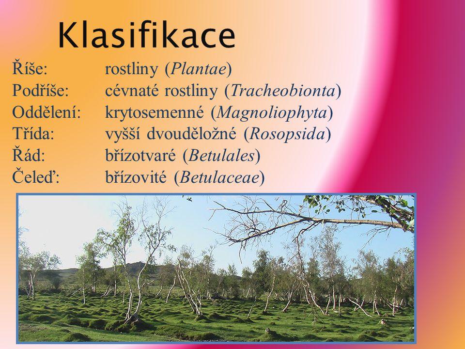 Klasifikace Říše:rostliny (Plantae) Podříše:cévnaté rostliny (Tracheobionta) Oddělení:krytosemenné (Magnoliophyta) Třída:vyšší dvouděložné (Rosopsida)