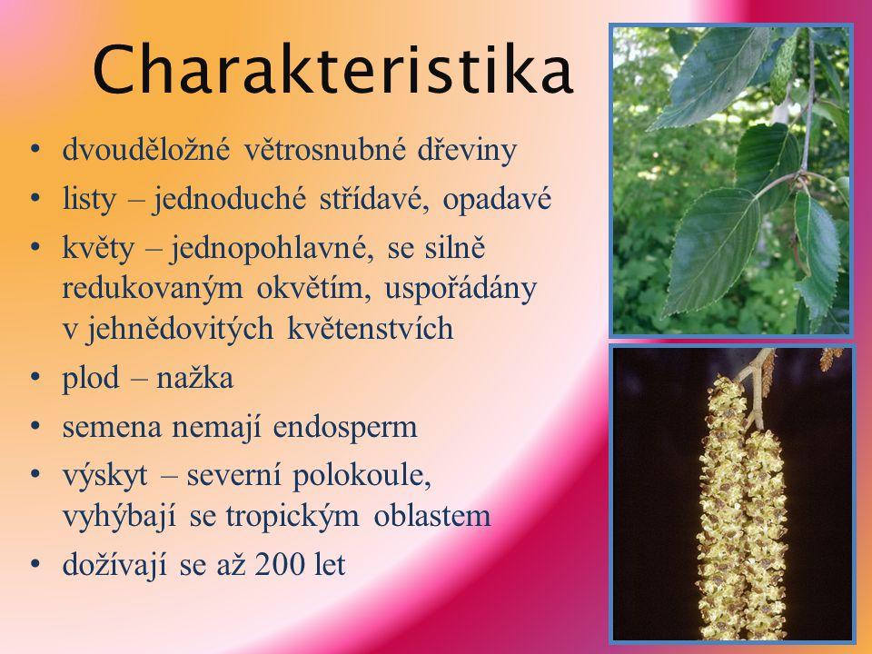Charakteristika dvouděložné větrosnubné dřeviny listy – jednoduché střídavé, opadavé květy – jednopohlavné, se silně redukovaným okvětím, uspořádány v