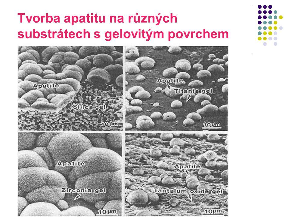 Tvorba apatitu na různých substrátech s gelovitým povrchem