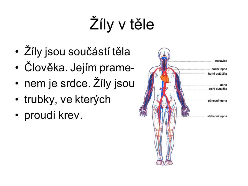Žíly v těle Žíly jsou součástí těla Člověka. Jejím prame- nem je srdce. Žíly jsou trubky, ve kterých proudí krev.