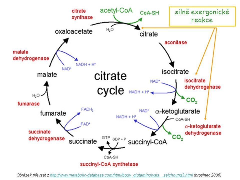 Obrázek převzat z http://www.metabolic-database.com/html/body_glutaminolysis__zeichnung3.html (prosinec 2006)http://www.metabolic-database.com/html/bo
