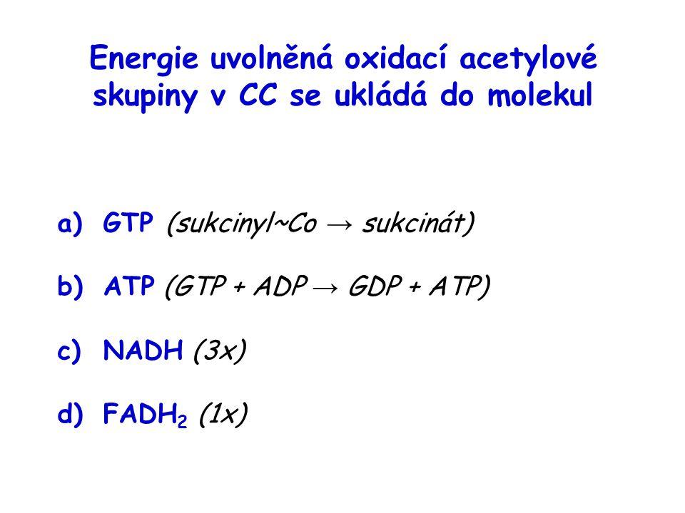 Energie uvolněná oxidací acetylové skupiny v CC se ukládá do molekul a)GTP (sukcinyl~Co → sukcinát) b)ATP (GTP + ADP → GDP + ATP) c)NADH (3x) d)FADH 2