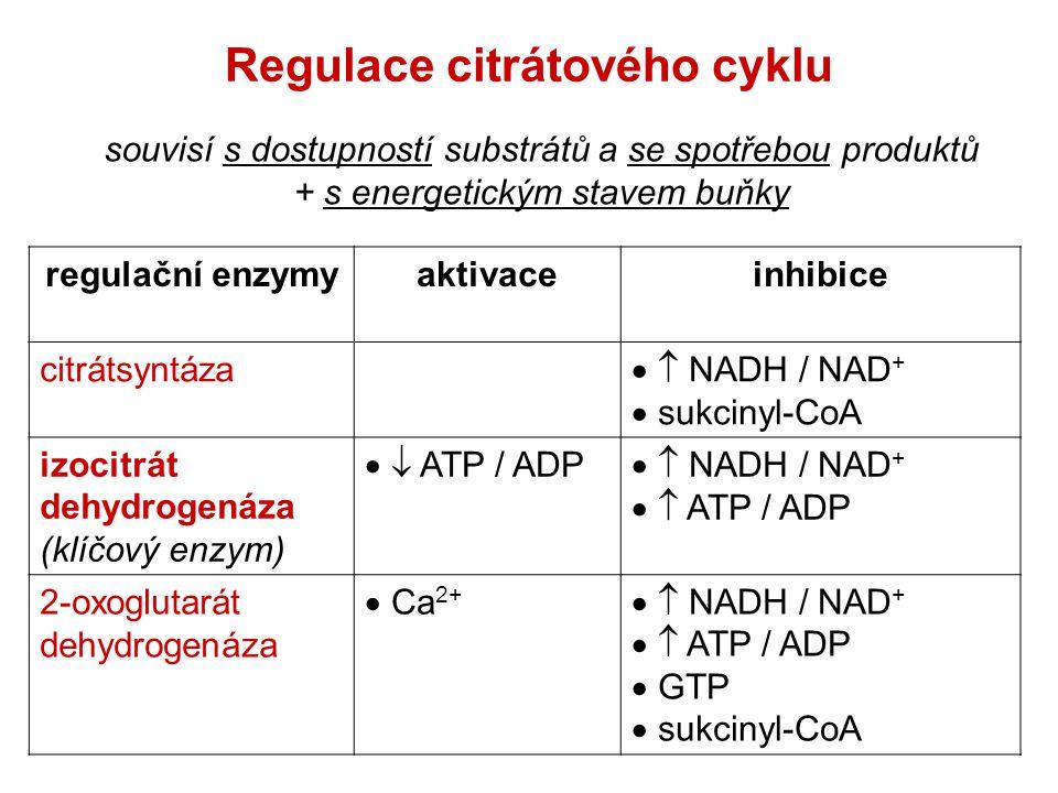 Regulace citrátového cyklu regulační enzymyaktivaceinhibice citrátsyntáza   NADH / NAD +  sukcinyl-CoA izocitrát dehydrogenáza (klíčový enzym)  