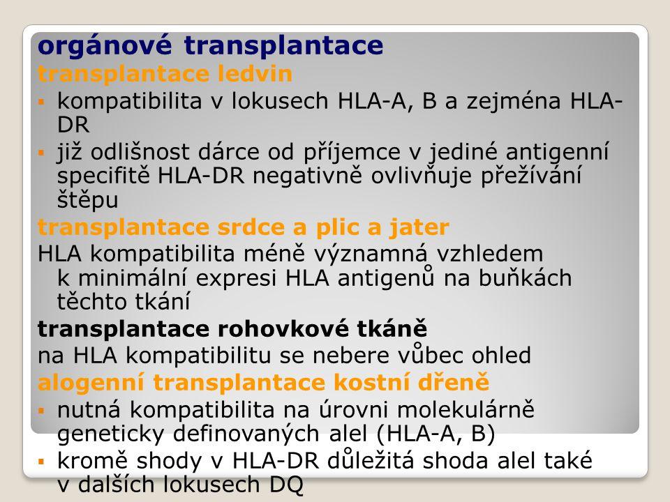 orgánové transplantace transplantace ledvin  kompatibilita v lokusech HLA-A, B a zejména HLA- DR  již odlišnost dárce od příjemce v jediné antigenní