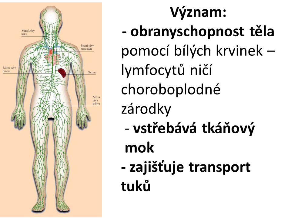 Význam: - obranyschopnost těla pomocí bílých krvinek – lymfocytů ničí choroboplodné zárodky - vstřebává tkáňový mok - zajišťuje transport tuků