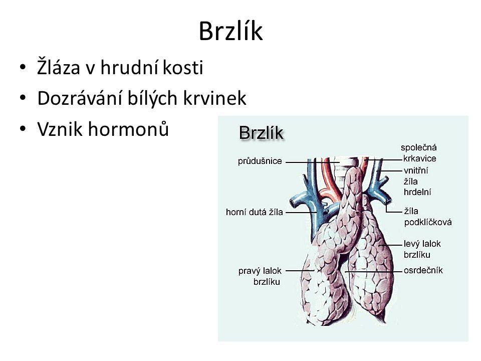 Brzlík Žláza v hrudní kosti Dozrávání bílých krvinek Vznik hormonů
