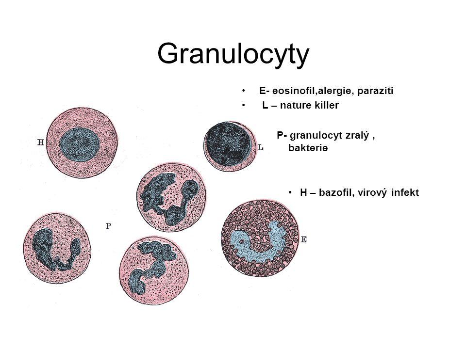 Granulocyty E- eosinofil,alergie, paraziti L – nature killer P- granulocyt zralý, bakterie H – bazofil, virový infekt